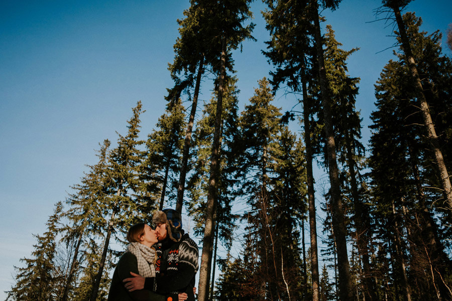 pine forest morning kiss
