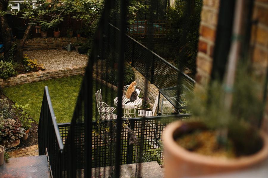 London Wedding Photographer cats in the backyard